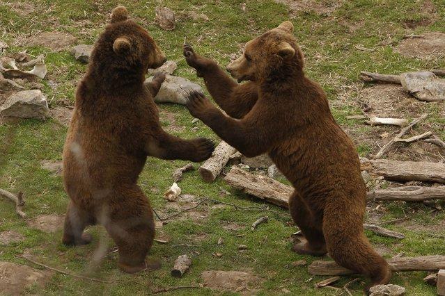 Rifugio per giovani orsi a Kuterevo