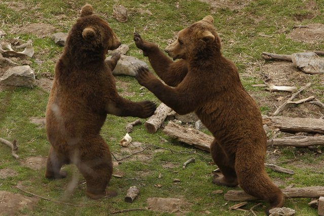 Das jungbärenasyl in Kuterevo