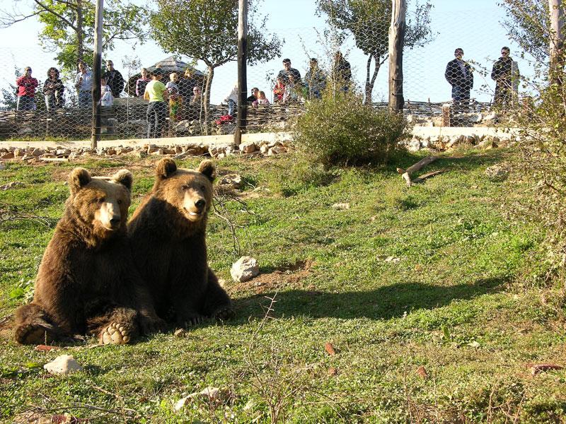 Refuge pour les petits ours à Kuterevo