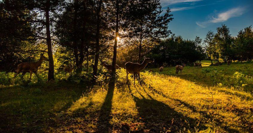 Ranch Deer Vally