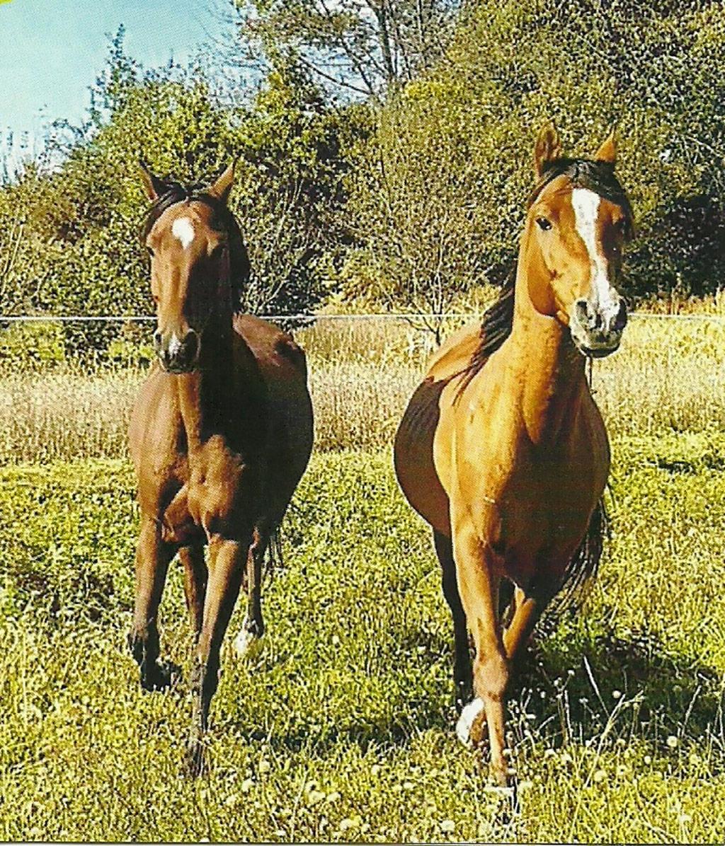 Il club di equitazione di Rakovica